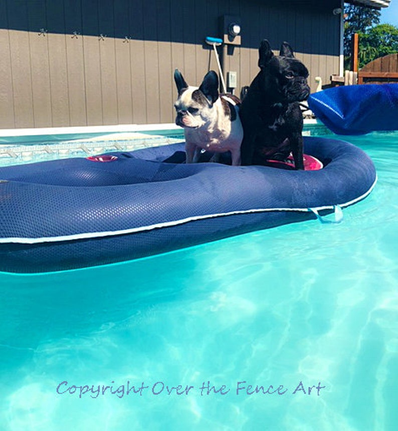Dog Card Blank Pool Party Invite Card French Bulldogs Party in Pool  Greeting Card