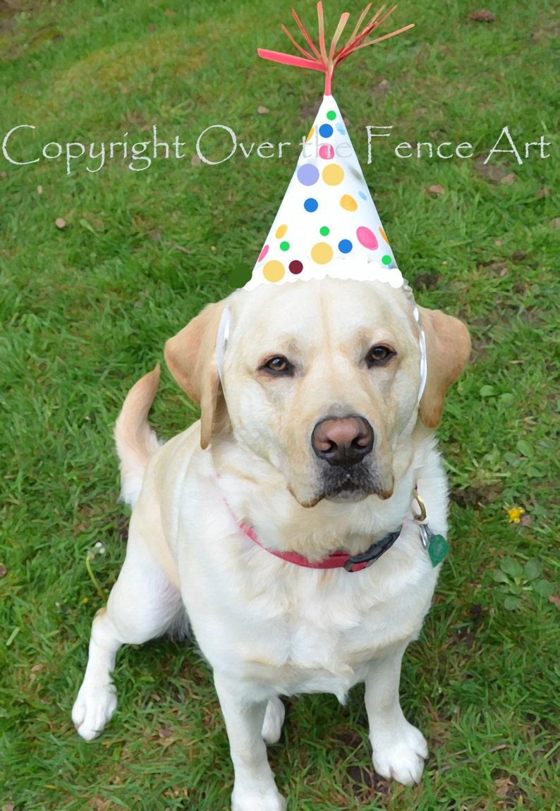 Dog Birthday Card YELLOW LABRADOR PUPPY With Happy