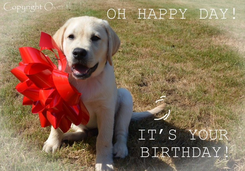 Dog Birthday Card YELLOW LABRADOR PUPPY With Happy