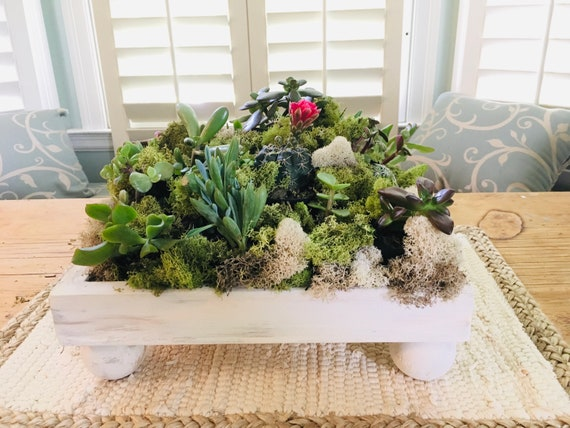 Succulent Centerpiece, 16 Individually Potted, Fully Rooted, Favors, Wedding, Housewarming,wood planter centerpiece,potted succulent,