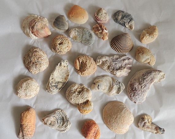 Vintage Decorative Natural Seashells Coral Fossils Shells.. Aquarium Beach Decor (#1)