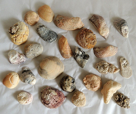 Vintage Decorative Natural Seashells Coral Fossils Shells.. Aquarium Beach Decor (#2)