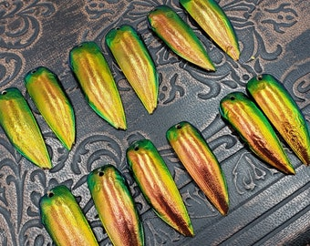 Copper Gold Beetle Elytra 6 or 12 Pair Drilled Red Jewel Beetle Wings Jewelry Making Scarab Beetle Wing Covers for Crafts