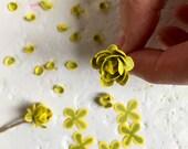 SV01 Sempervivum 1 12 Miniature Succulent Plant Kit