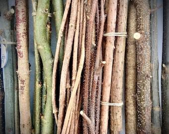Wild Crafted Oak Bark