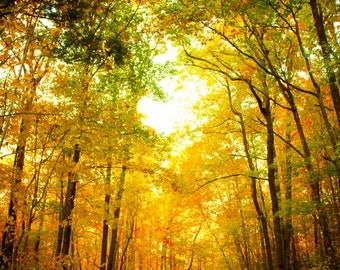 Fall Foliage, Fall Photography, Autumn Leaves,  Road Through the Woods, Landscape Photos, Yellow Leaves, Fall, Autum Home Decor