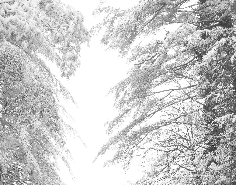 Snow winter photography tree prints winter landscape winter decor