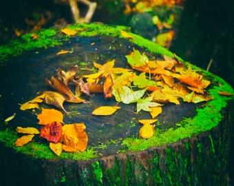 Fall Foliage, Fall Photography, Autumn Leaves,  Tree Stump, Landscape Photos, Yellow Leaves, Fall, Autum Home Decor