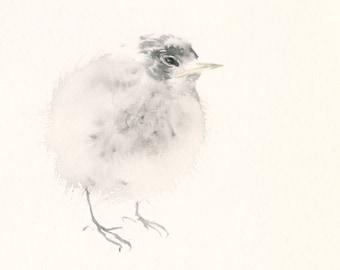 Fine Art Print from Original Watercolor Painting Baby Tern