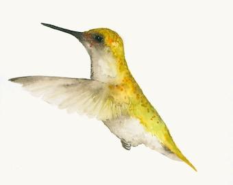 Bird Art Print from Original Watercolor Yellow Hummingbird