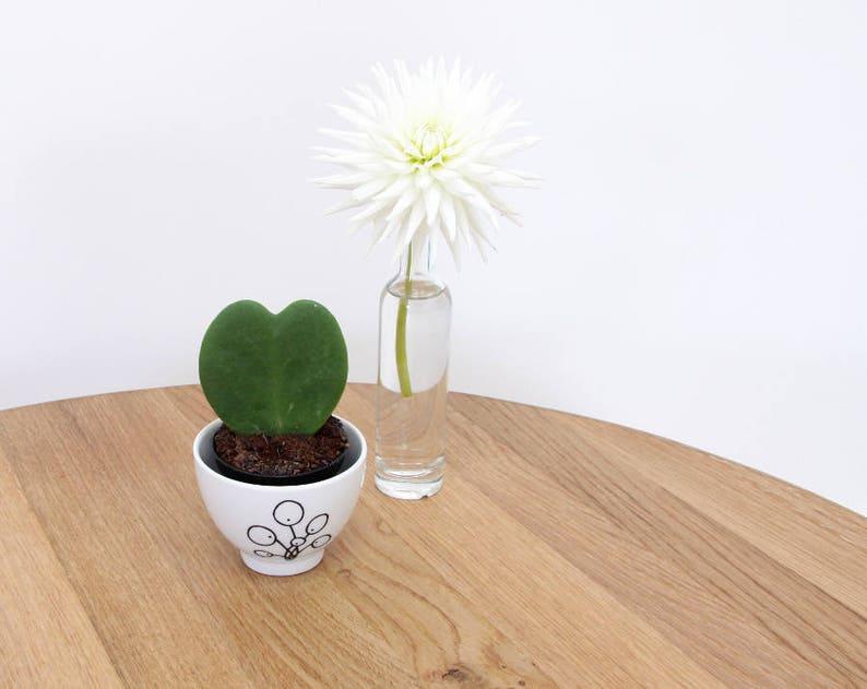 Pilea cup Planter Pilea peperomioides dip bowl