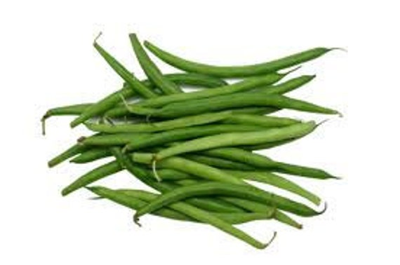 Bean STRIKE BUSH 200 Heirloom Non-gmo Seeds. FREE  Shipping