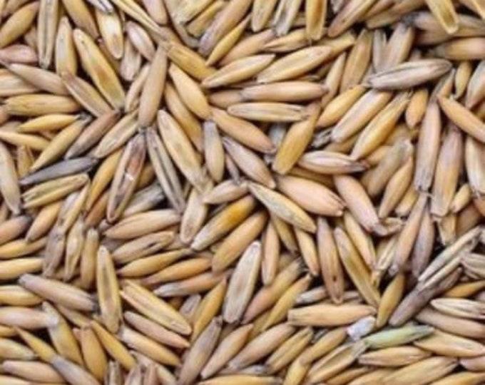 10 oz OAT Seed for Oats Grass fresh CatGrass( 10 ounces ) seeds USPS Shipping !