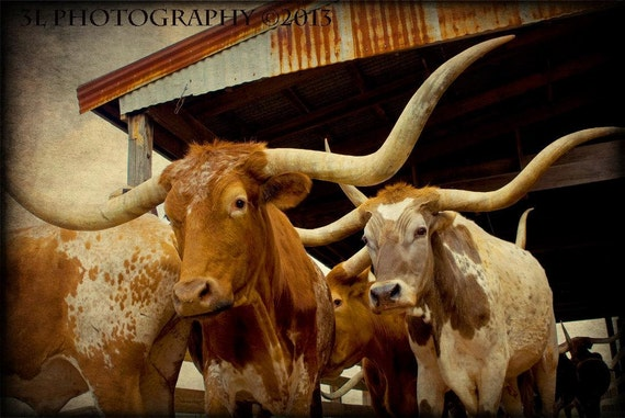 """SOUTHWESTERN LONGHORN WILDLIFE SIGNED PRINT 11/""""X14/"""" LIMITED EDITION OF 995"""