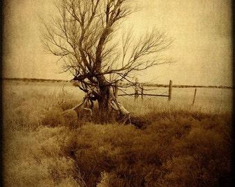 Fine Art Photography Print-Rustic Home Decor-Southwestern-Texas Landscape Fine Art Print