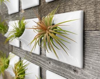 Modern 3 Inch Ceramic Wall Planter - Handmade in USA - Greenwall Vertical Garden Living Wall Art Airplant Holder Hanger Moss Wall