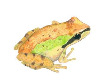 bronze Chorus Frog (original)