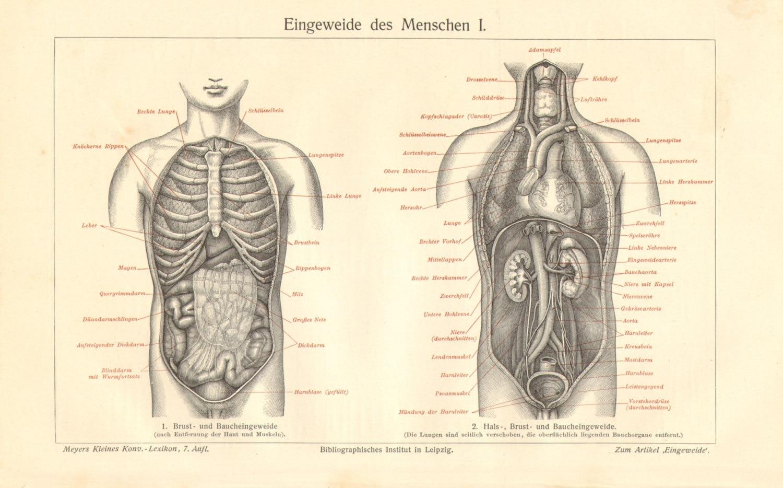 Berühmt Wo Sind Ihre Organe Entfernt Ideen - Anatomie Ideen ...