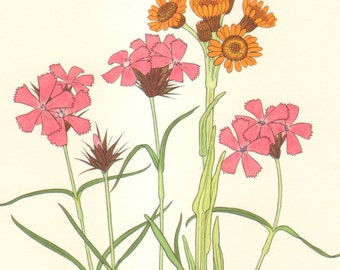 1959 Dwarf Cudweed, Common Alplily, Moor Grass, Carthusian Pink, Orange Groundsel Vintage Lithograph to Frame