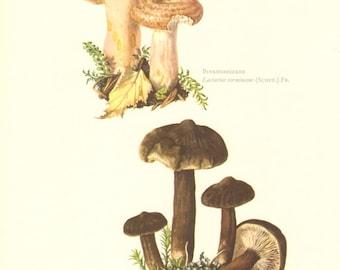 1963 Woolly Milkcap Lactarius torminosus and Lactarius lignyotus Vintage Offset Lithograph