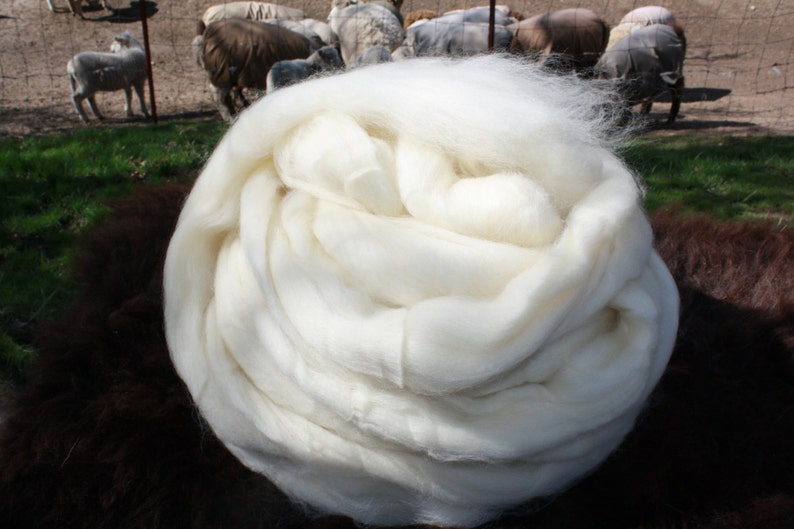 1 lb. Montana Corriedale Combed Top Wool Roving image 0