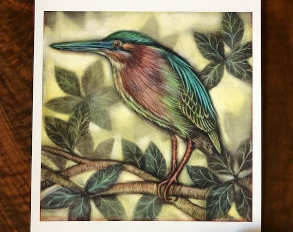 Green Heron|illustrated green heron|green heron art|green heron archival print|green heron illustration|green heron ink painting|green heron