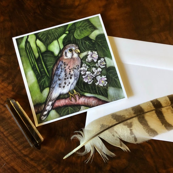 American Kestrel Square Greeting Card