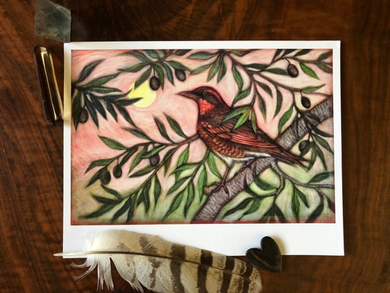 Varied Thrush and Olive Archival Print