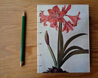 Small Journal/ Amaryllis/ Botanical Illustration/ Floral Notebook