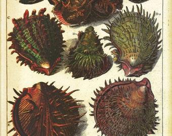 SHELLS Print Book Plate 43 Beautiful Shells French
