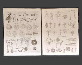 Antique Botanical Prints, Plate XXXII A. Bell Sculpt, Animalcules,  Plate CIII A. Bell Sculpt, Botany Parts of the Flower, Book Plates