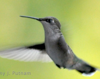 Photo magnet - hummingbird
