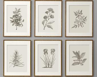 Botanical Prints, Botanical Print Set, Botanical Art, Botanical Wall Art, Botanical Art Prints, Kitchen Decor, Kitchen Wall Art, Wall Art