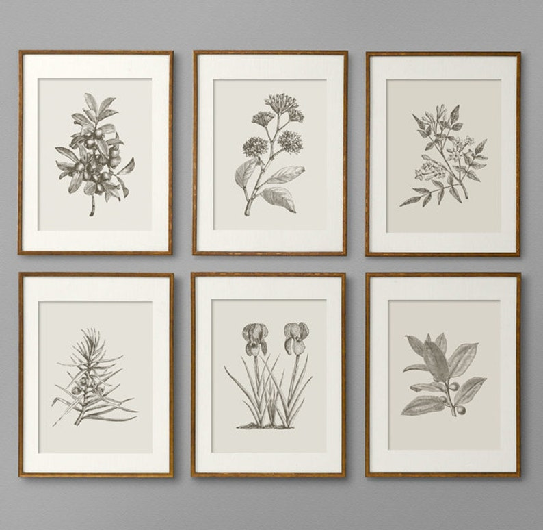 Botanical Prints Botanical Print Set Botanical Art Botanical image 1