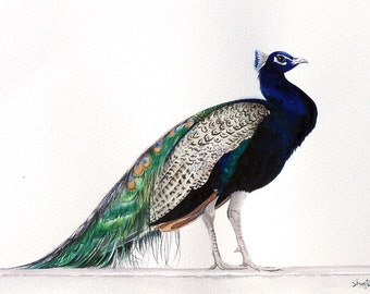 Blue Peafowl Watercolor Painting