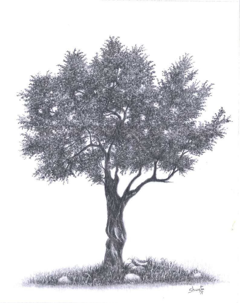 Olive tree drawing original tree drawing landscape drawing black and white artwork realistic tree