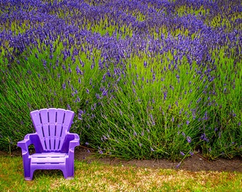 Lavender Chair, Floral Card, Blank Note Cards, Cards With Envelopes, Photo Greeting Cards, Photo Note Cards, Photo Notecards