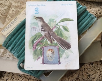 The Singer Sewing Machine Company Thought You Should Collect Song Birds Antique Trade Card