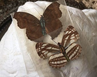 They Are Ready To Come Out Of Hiding Vintage Paper Body Real Wing Butterflies