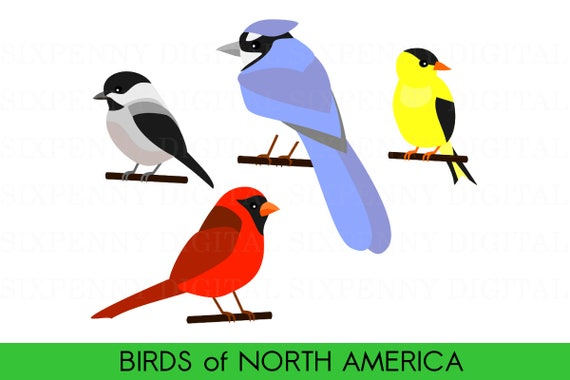 cute bird clipart birds of north america cardinal clipart etsy