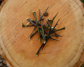 Blackthorns in pack of ten for use in spells of power and protection!