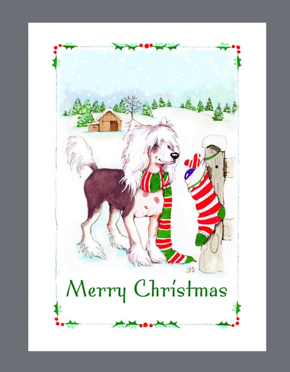 Dog Christmas Cards.Chinese Crested Dog Christmas Cards Box Of 16 Cards And Envelopes