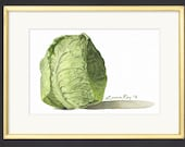 Savoie Cabbage Watercolor Print • Gourmet Food Art Prints • Stylish Kitchen Decor • Modern Kitchen Wall Decor • Vegetable Watercolor