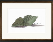 Shiso Herbs Watercolor Print • Food Watercolor Prints • Kitchen Wall Decor • Kitchen Watercolor • Gifts for Mom • Modern Kitchen Wall Decor