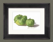 Tomatillo Watercolor Print • Gourmet Food Prints • Stylish Kitchen Decor • Modern Kitchen Wall Decor • Vegetable Watercolor • Gift for Mom