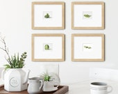 Vegetables Set of 4 Cabbage Watercolor Giclée Prints