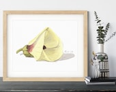 Okra Flower Watercolor Print | Flower Kitchen Art Print Kitchen Decor | Modern Kitchen Wall Decor  Floral Watercolor | Home Office Art
