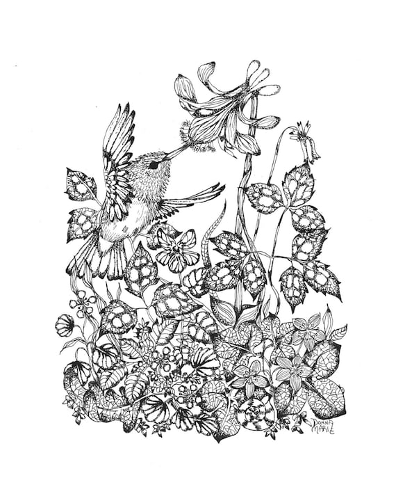 Pen and Ink - Hummingbird -  Illustration Print