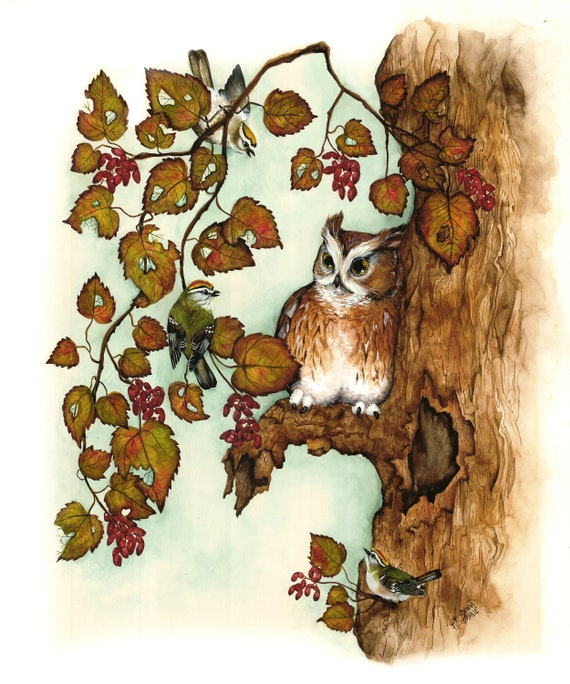 Set of Four Blank All Occasion Greeting Card- Nature and  Owl Birds -Thank You Note