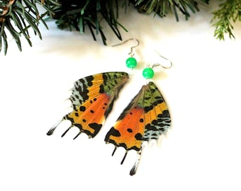 Sunset Moth Earrings, Real Moth Earrings, Natural History Earrings